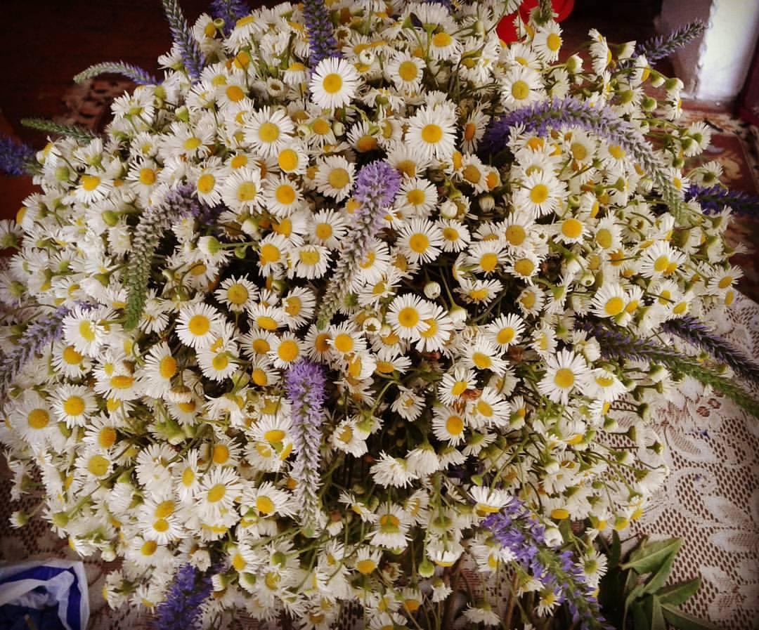 Vera Flowers (29)
