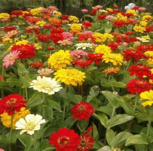 autumn flowers wanaka