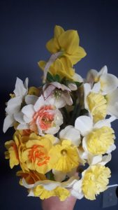 mixed daffodils wanaka flower grower