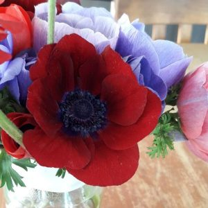 anemones wanaka