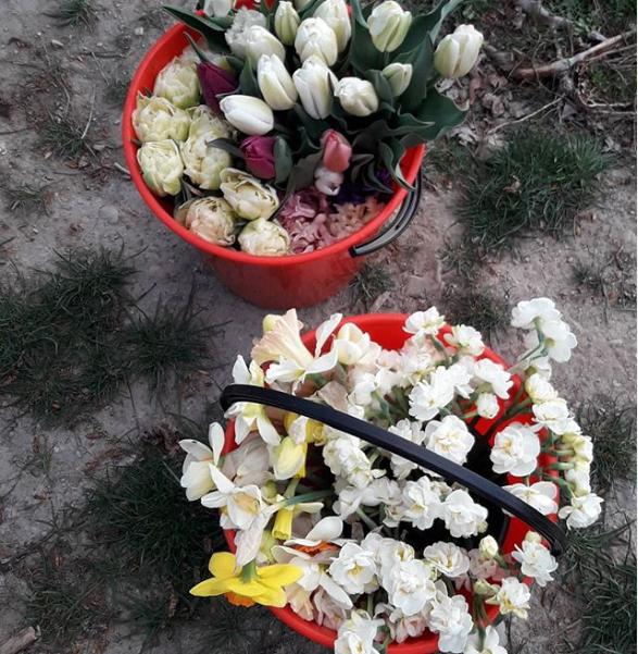 tulip bucket wanaka